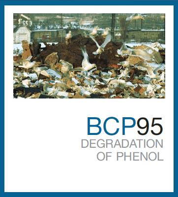 BCP95™